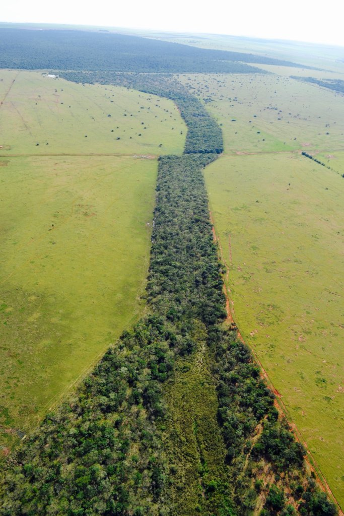 Reconnect the Atlantic Forest with 20.000 Trees