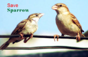 Give Home to Innocent Sparrow Birds