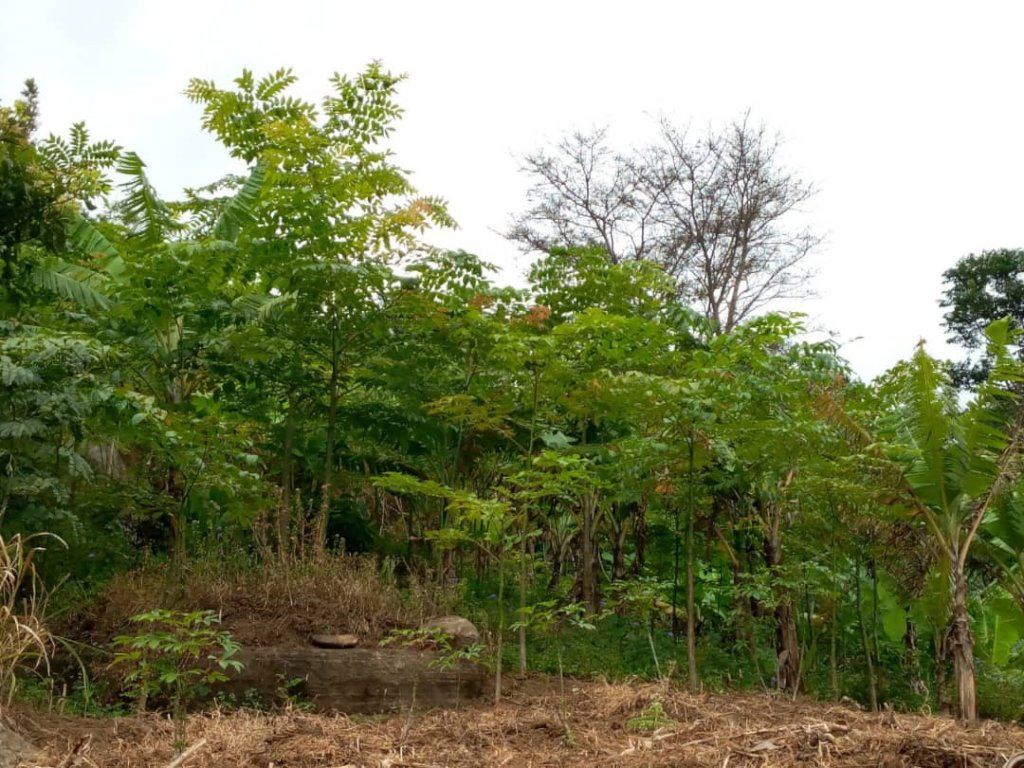 Agroforestry systems boost soil fertility.