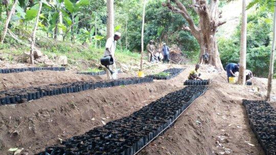 Tree seedlings at a seedling nursery.