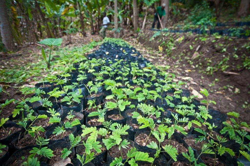 1422 seedlings for Choma and Kisosa.
