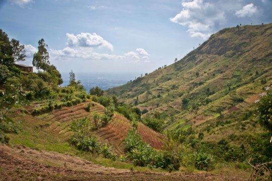 The Uluguru Mountains where trees are planted.
