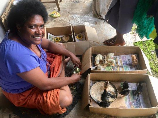 Chicks Produced On Koro Island Bring Joy