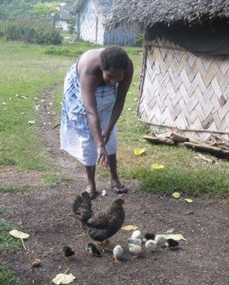 Tanna Free-range Chickens