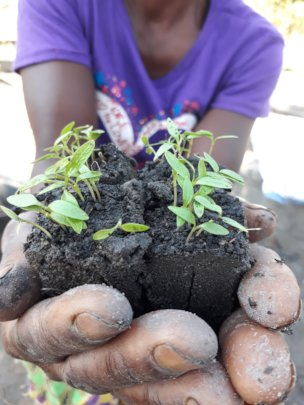 Women in Permaculture leading the way in Zambia