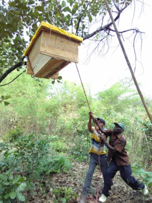 Installing a beehive