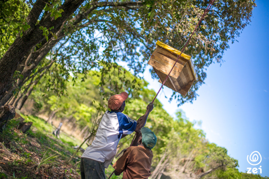 Farmers in Luanshya mounting a new beehive