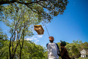 Beehives are mounted on trees in restoration areas