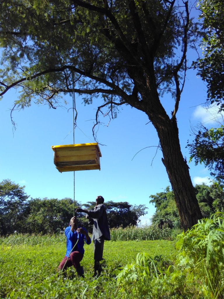 Positioning beehives in the trees