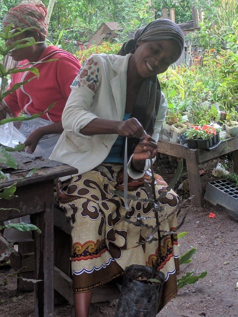 Fruit tree grafting Training