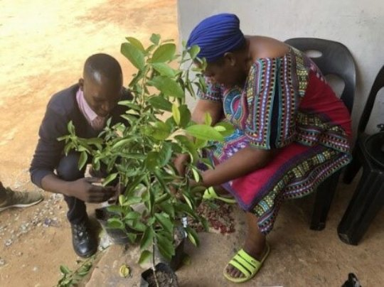 Women-led tree nurseries
