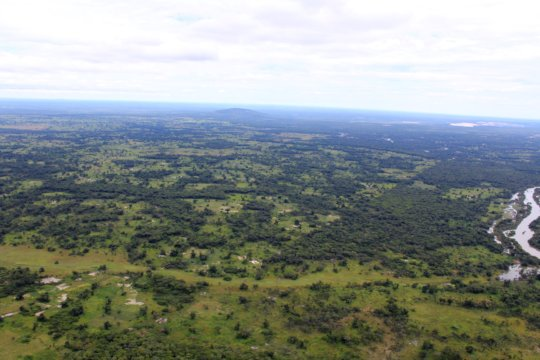 Aerial view of the farm woodlands