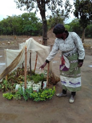 Veronica S. showing her small-scale tree nursery