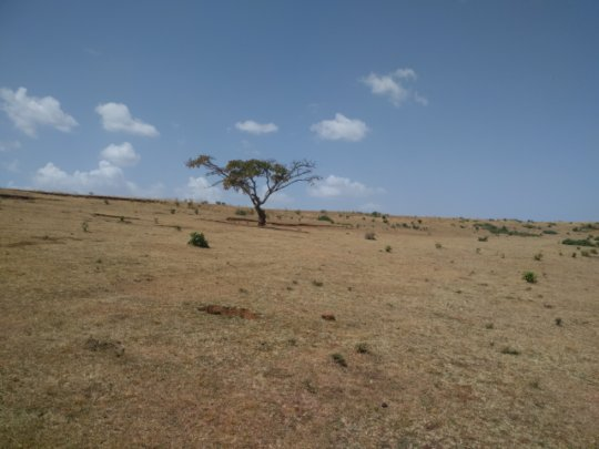 Without trees topsoils are not protected
