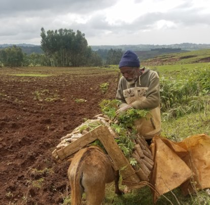One of the Model Farmers in Amhara