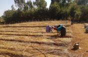 Help communities plant trees in Amhara, Ethiopia