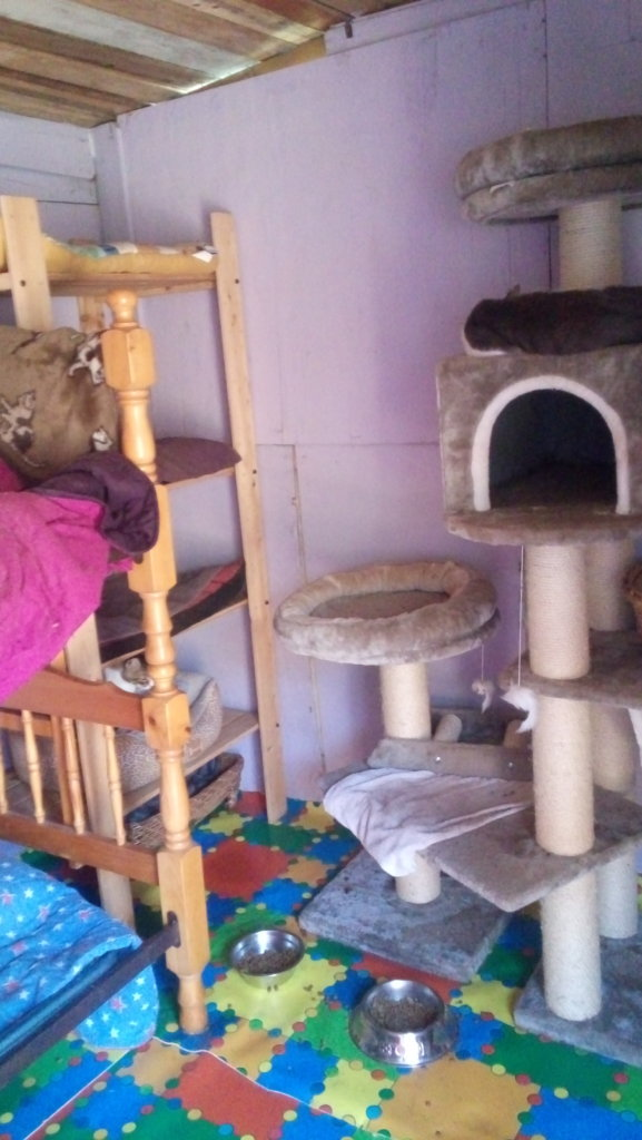 Insulating in cat sheds  and Solar Plates