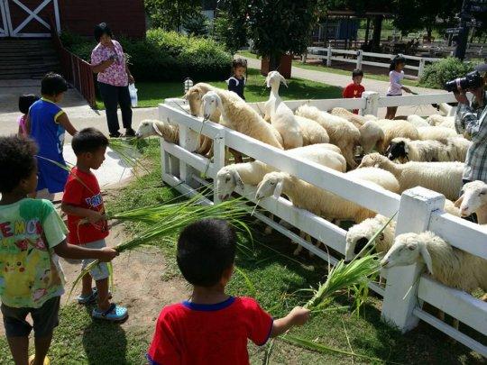 Tamar Childrens Outing to Sheepfarm in Pattaya