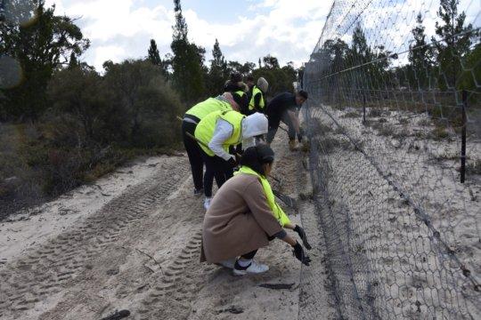 Volunteers maintaining the predator-proof fence