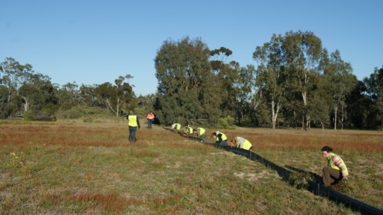 Volunteers constructing pitfall trapping line