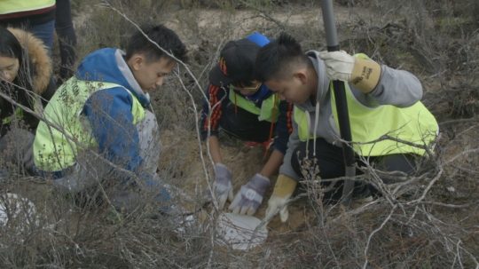 Volunteers installing pitfall traps