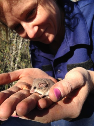 Western Pygmy Possum held by Ellie
