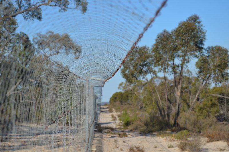 Rewilding the Desert: saving threatened species