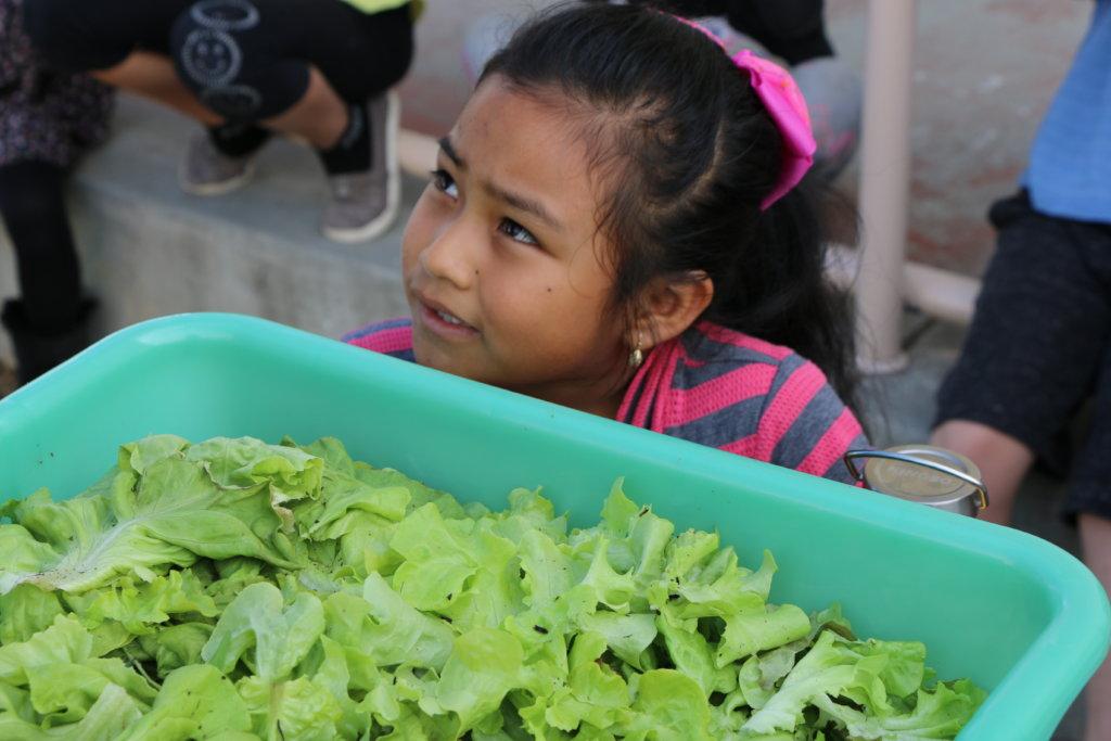 Lettuce for the salad bar