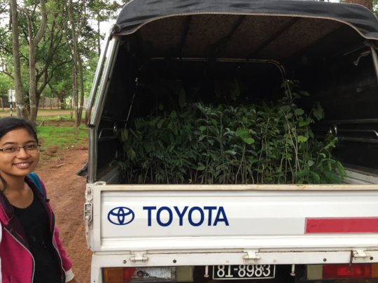Getting trees to take back for planting at farm
