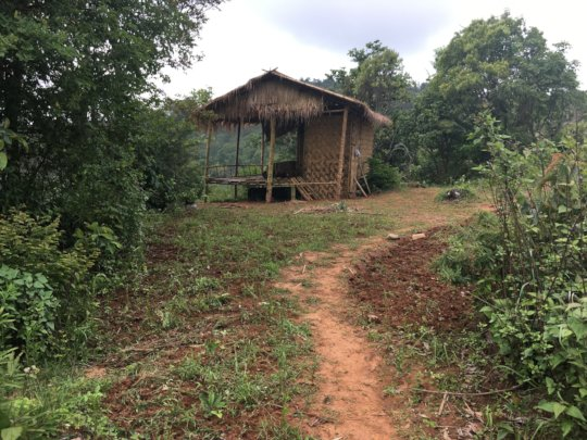 First bamboo house planted with beans,corn,lentil
