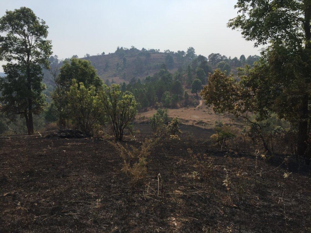 Dry season forest fires burn parts of farm