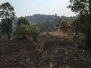 Dry season forest fires burn parts of farm