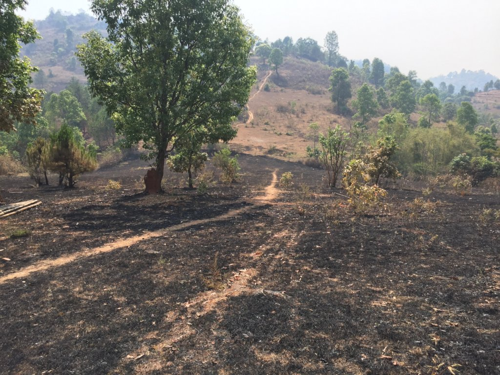 Forest fire burns a large area of farm