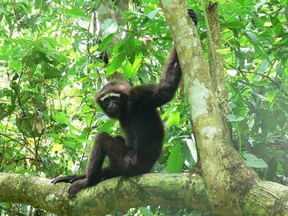 Preserving Primates in China