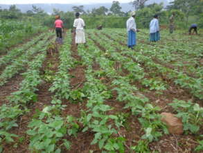 Promoting Organic Food Production & Nutrition