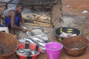 Microfinance - smoked fish