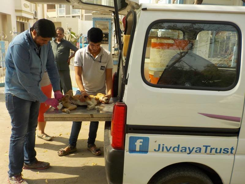 Reports on Animal Care on Wheels - GlobalGiving