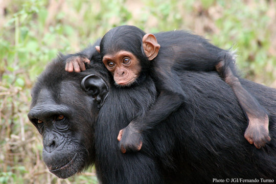 Newborn Catching a Ride on Mom's Back