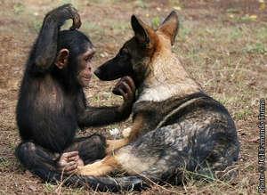 Makasi and Lobo