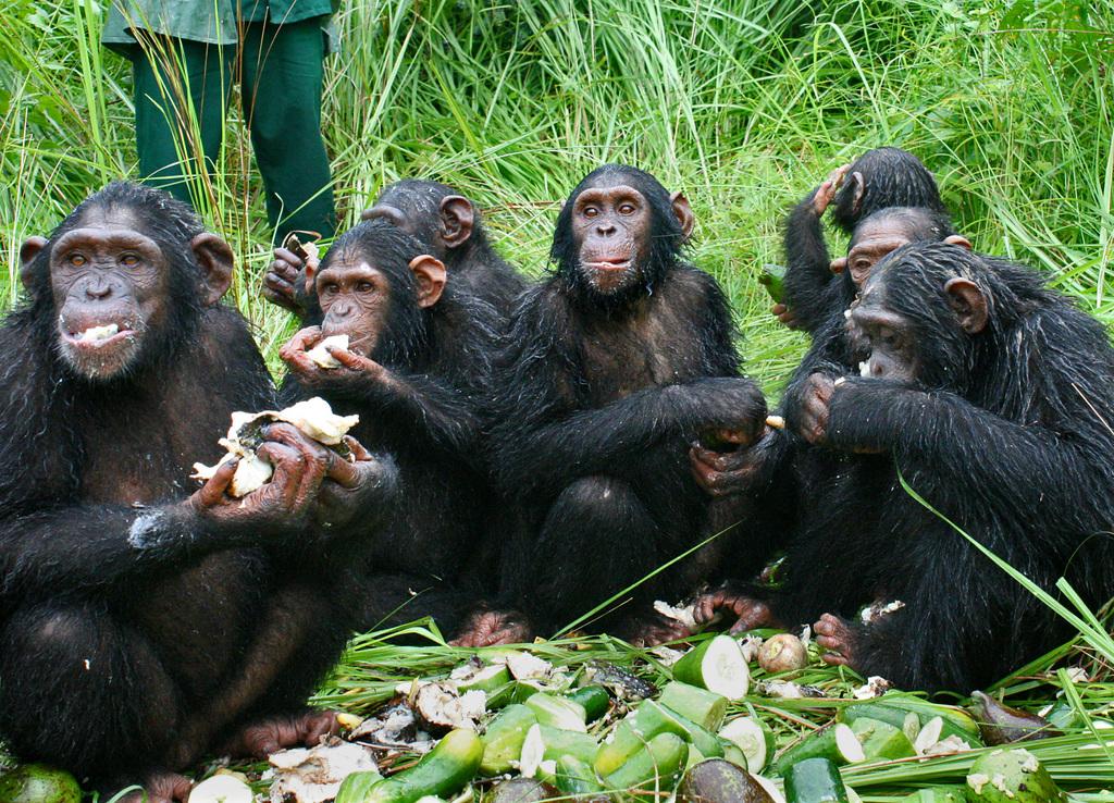 Kudia, center, eating fresh veggies