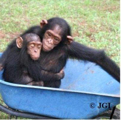 Lemba and a friend