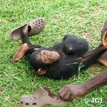 Lemba playing with some shoes