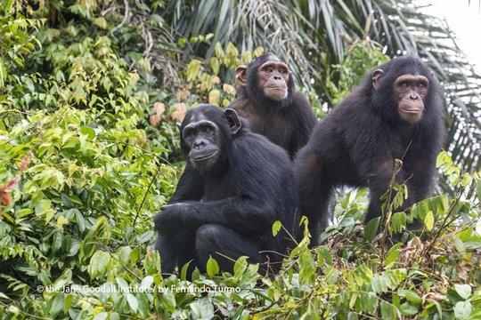 Mambou, Alex and their other friend, Sammy