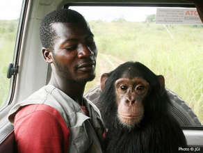 Luc's arrival to Tchimpounga with Keeper Serge