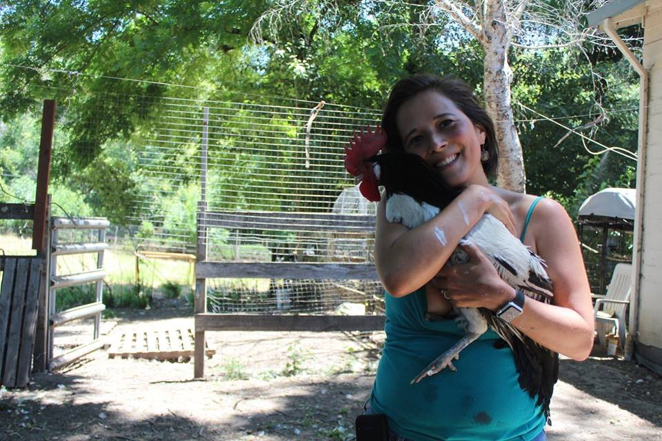 Rescue, Rehab & Re-homing of Domesticated Chickens