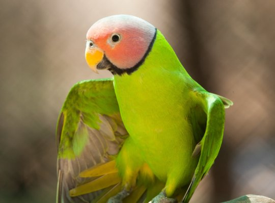 Help Build a Free Flight Aviary for Rescued Birds