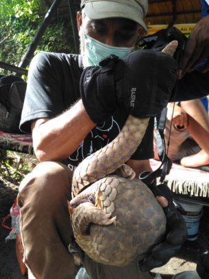 Indonesian Species Conservation Program (ISCP)