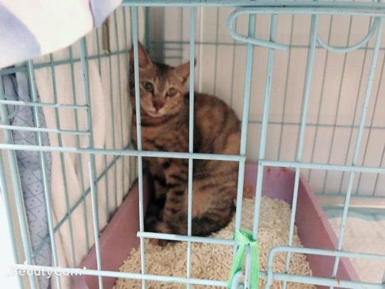 Adult cat from Siu Ho Wan
