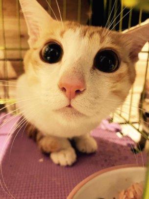 Home cat-1