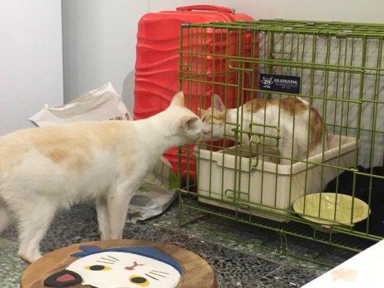 Home cat-2